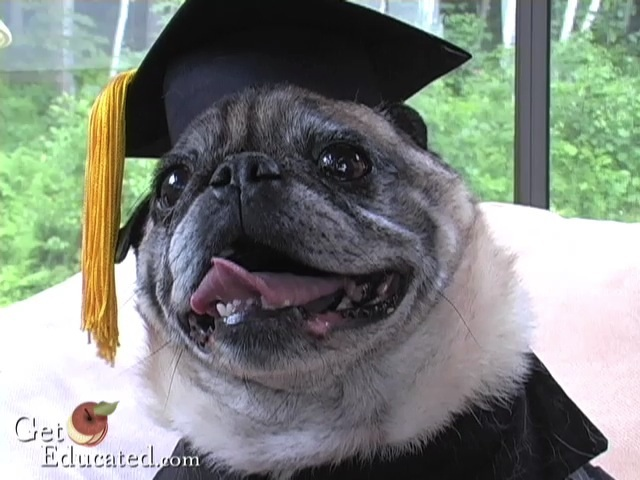 Dog Earns Online MBA